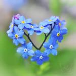 Sevgi en güzel hediyedir insanoğluna